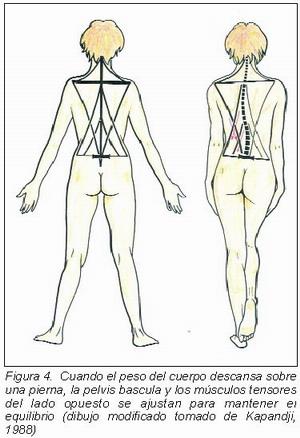 Estudio y prevención de las lesiones posturales de la espalda en el ...
